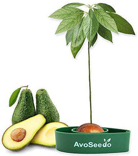 AvoSeedo Kit Jardineria para Aguacate - Gadget Decoracion Casa Y Decoracion...