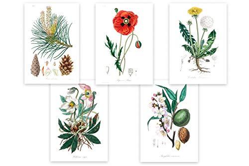 Wolfenthal Set di Poster Sulla Botanica di (Vintage) «Medical Botany» 5 x DIN...