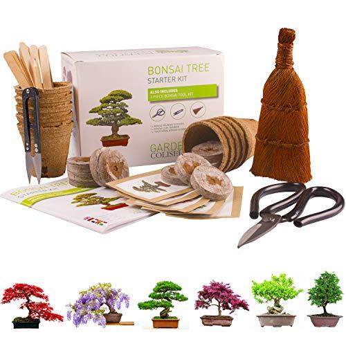 BONSAI CULTIVA 6 DE TUS PROPIOS árboles de bonsai. Kit de germinación JUEGO DE...