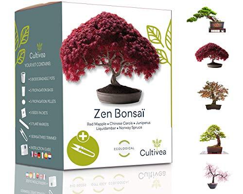 Cultivea Mini - Kit de 5 Bonsái para cultivar - Semillas de calidad - Jardín -...