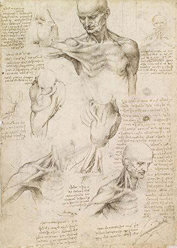 Póster vintage de Anatomía de Leonardo da Vinci C1510 de 250 g/m² con texto...