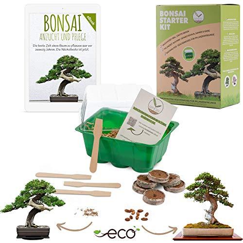 Bonsai Kit incl. eBook GRATUITO - Set de plantas con mini invernadero, semillas...