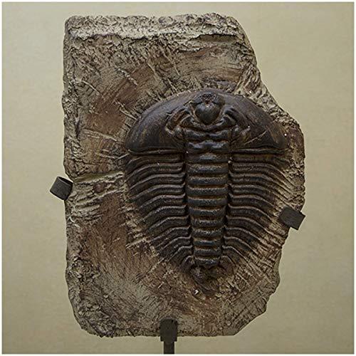 WJH Auténtico Grande de fósiles de artrópodos Trilobite Cámbrico...