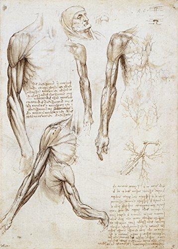 Anatomía LEONARDO da VINCI'Ecorché' Siglos XIV al XV. 420mm x 297mm A3 Impreso...