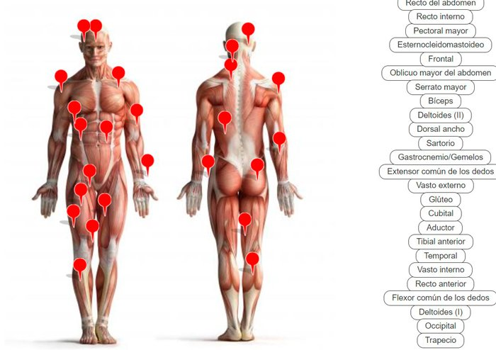 juego-online-musculos-humanos