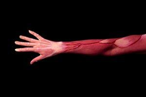 juegos-aprender-musculos-cuerpo-humano-facil